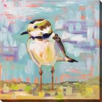 "24"" Square Coastal Plover 2 Canvas"