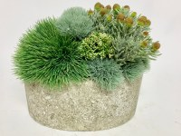 "10"" Sedum Grass In Oval Cement Bowl"