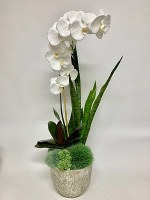 """37"""" White Orchid and Sansaveria Grass In Cement Pot"""