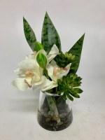 "12"" Cream Cymbidium Succulent In Glass Vase"