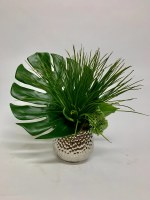 """13"""" Papyrus and Monstera Leaf In Silver Pot"""