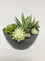 "10"" Green and White Succulents In Black Oval Bowl"
