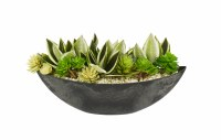 Large Green and White Succulent In Black Oval Bowl