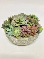 "9"" Multicolored Succulent In Round Bowl"