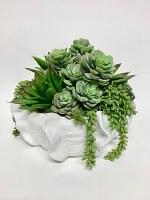 "10"" Succulent In White Flange Pot"