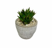 """10"""" Aloe Plant In Taupe Pot"""