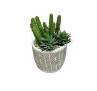"10"" Pipe Cactus and Echeveria In Taupe Pot"