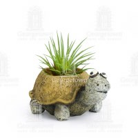 "1.75"" Preston The Tortoise Planter"