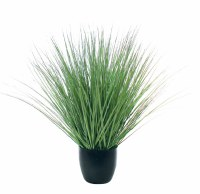 "18"" Green River Grass Potted"