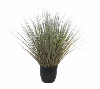 "18"" Red and Green River Grass Potted"