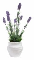 "10"" Lavender With White Pot"