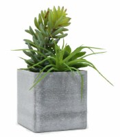"5"" Mixed Green Succulents With Square Gray Pot"