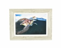 "24"" x 32"" Turtle Swim Photo Gel Framed"