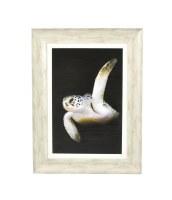 """32"""" x 24"""" Turtle Dark Background Gel Photo Framed"""