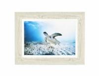 """24"""" x 32"""" Turtle Under Water Gel Photo Framed"""
