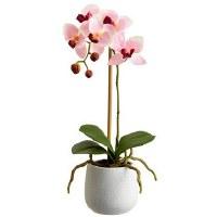 "15"" Pink Phaleo In White Pot"