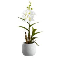 "15"" White Dendrobium In White Pot"