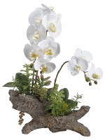 "21"" White Orchid and Succulent On Log"