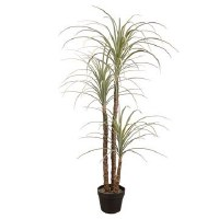 "48"" Gray and Green Dracaena Potted"