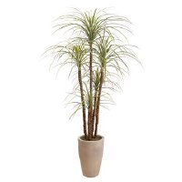 "70"" Gray and Green Dracaena Potted"