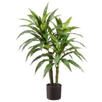 "36"" Green and Gray Dracaena Potted"