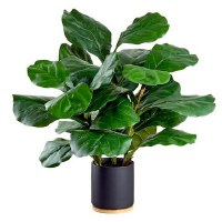 "26"" Green Fiddle Leaf Potted"