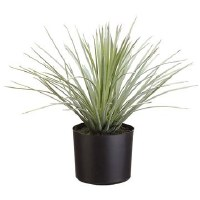 "15"" Green and Gray Yucca Potted"