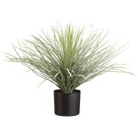 "19"" Green Yucca Potted"