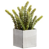 "12"" Green and Gray Dinkey In Square Pot"
