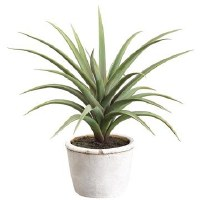 "13"" Green and Gray Tilandsia In White Round Pot"