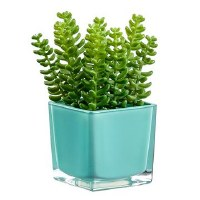 "6"" Green Sedum In Aqua Square Pot"