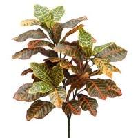 """26"""" Multicolored Croton"""