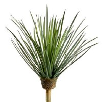 "14"" Green and Gray Whipple Yucca"