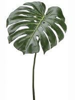 "23"" Green Philo Leaf"
