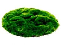 """10"""" Round Green Moss Sheet"""