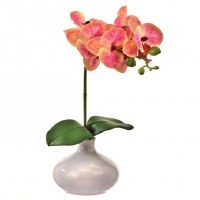 "13"" Pink and Coral Faux Phaleo In White Vase"