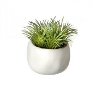 "3.5"" Green Faux Tilandsia In White Pot"
