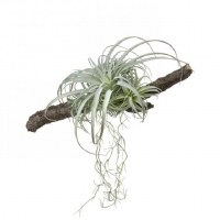 "17"" Gray and Green Faux Tilandsia On Branch"