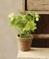 """7"""" Green Clover Potted"""