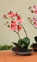 "11"" Coral Orchids In Low Dish"