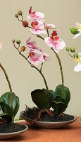 "11"" Pink Orchids In Low Dish"