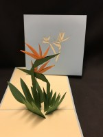 """6"""" Square Pop Up Bird Of Paradise Card"""