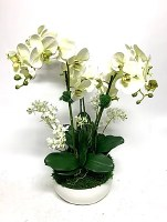 "26"" Pale Green Orchid In Medium White Bowl"
