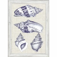 "27"" x 19"" 4 Blue and White Shells Framed Print"