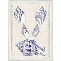 "27"" x 19"" 5 Blue and White Shells Framed Print"
