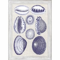 """27"""" x 19"""" 8 Blue and White Cowrie Shells Framed Print"""
