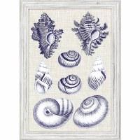 "27"" x 19"" 8 Blue and White Snail Shells Framed Print"
