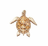 """11"""" Brown Shell Capiz Turtle Wall Plaque"""