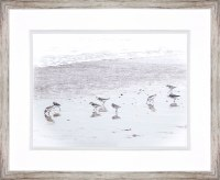 """30"""" x 36"""" Sandpipers Framed Print"""