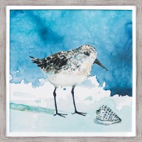 "27"" Square Shore Bird With Shell Facing Right Framed Gel Print"